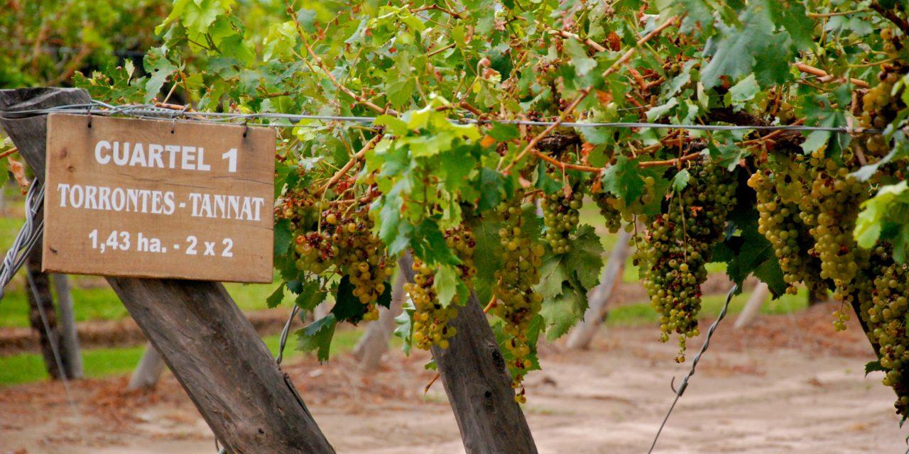 Oenotourisme : Se réveiller parmi les vignobles en Argentine