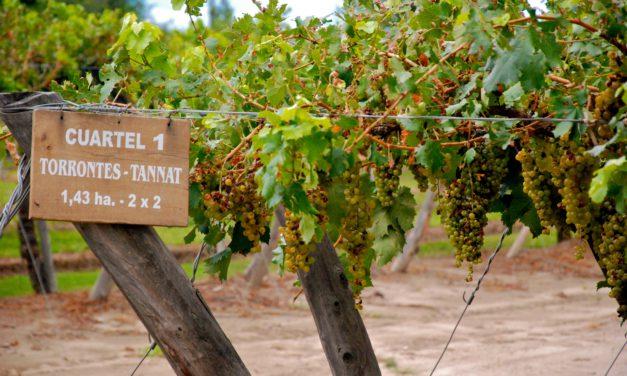 Le vin de Mendoza attend avec impatience un changement politique