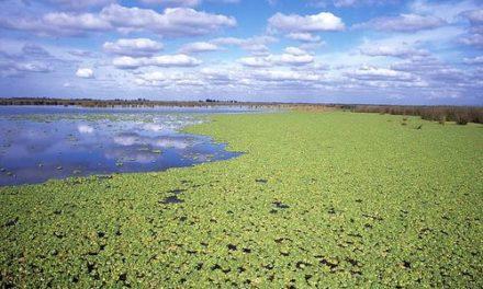 Province de Buenos Aires: La réserve naturelle Otamendi
