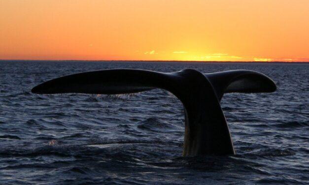 Climat à Puerto Madryn : quand partir ?