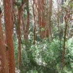 Partez à la découverte du Parc National de Los Arrayanes !