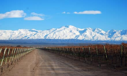Les principaux cépages cultivés en Argentine