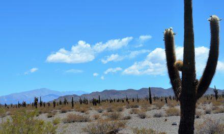 Les Parcs Naturels de la région de Salta et Jujuy