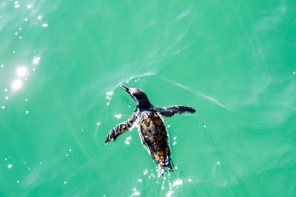 La Péninsule Valdès, une des baies la plus belle du monde !