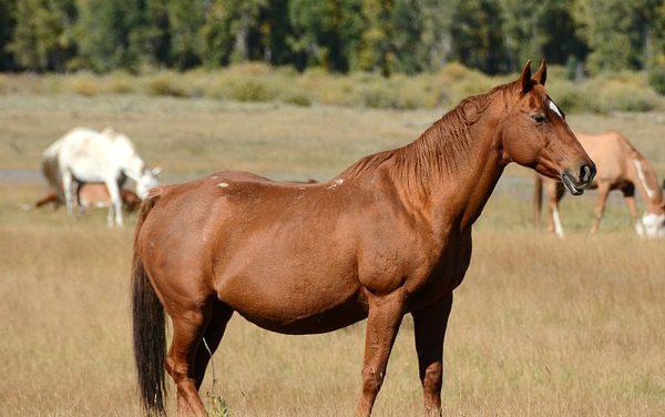 Martín Tatta : l'homme qui murmurait à l'oreille des chevaux !
