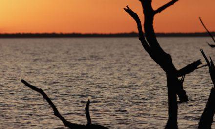 Esteros del Iberá : une zone naturelle dans la province de Corrientes