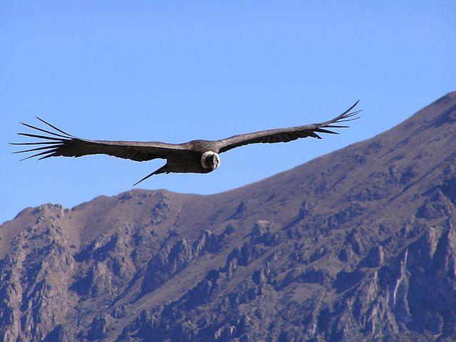 À la découverte des oiseaux d'Argentine !