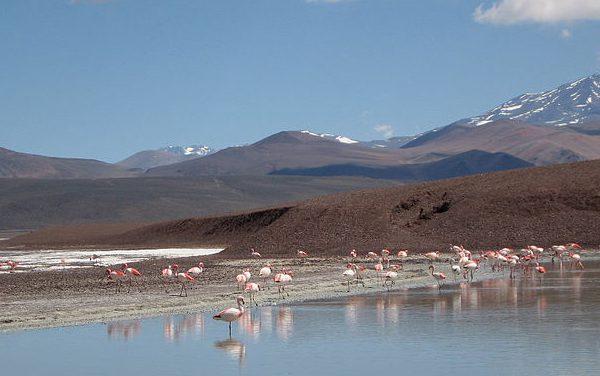 La mysterieuse réserve de la Laguna Brava