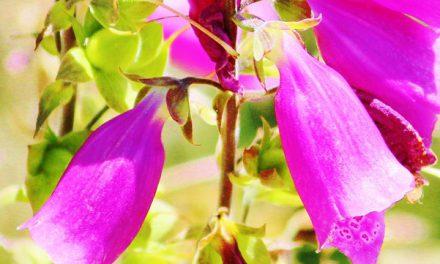 De jolies plantes et fleurs dans la région de Patagonie !