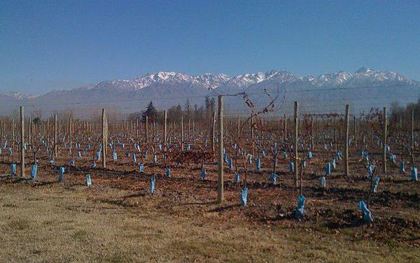 Réserve naturelle de la Province de Mendoza : le Tupungato