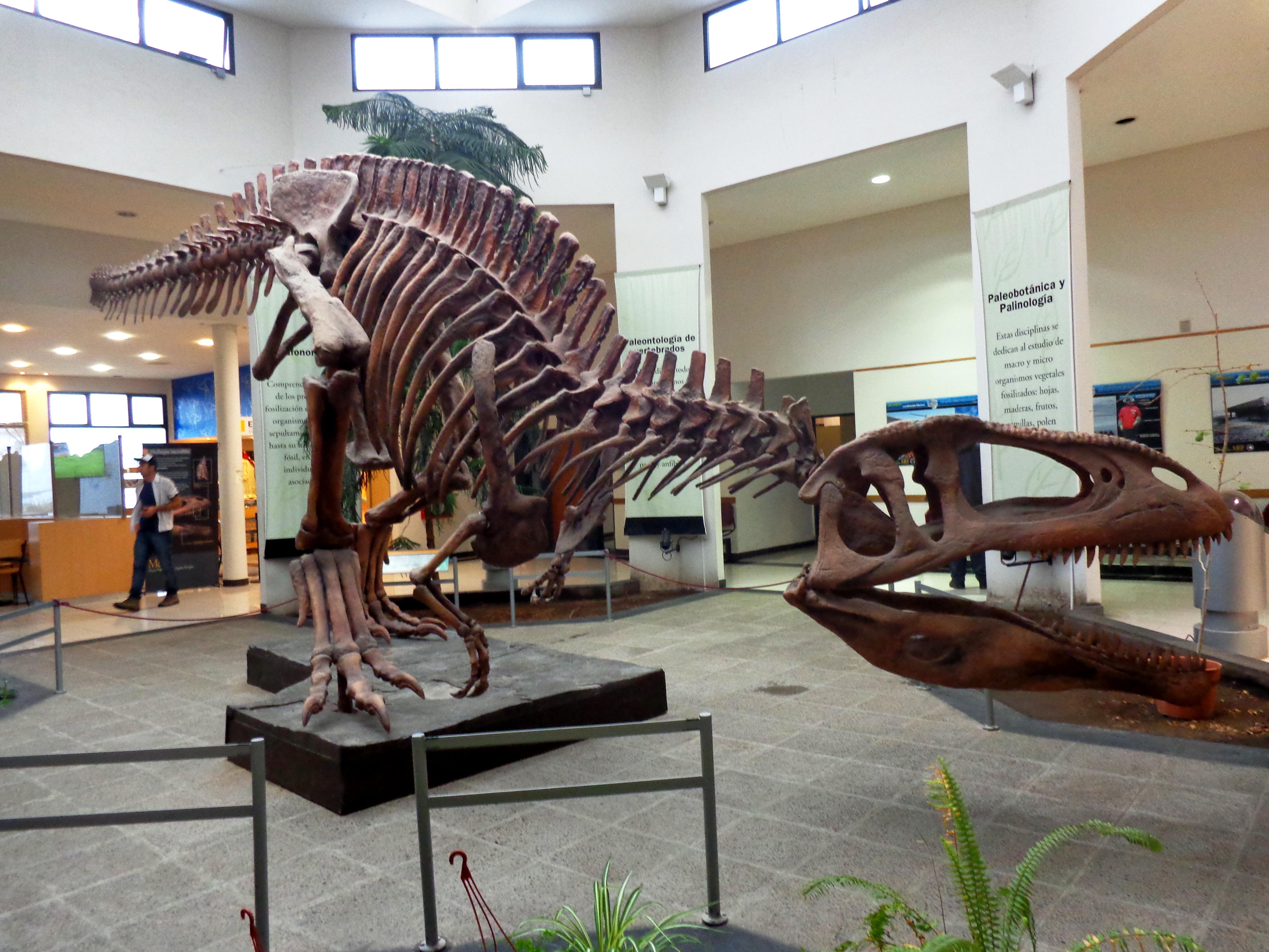 Dans Cette Ville Vous Pourrez Aussi Visiter Le Muse Palontologique O De Nombreuses Rpliques Dinosaures Sont Prsentes Pour En Savoir Plus Sur Trelew