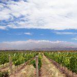 Notre sélection d'hôtels à Mendoza