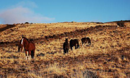 A faire – des balades à cheval  dans les plus beaux endroits d'Argentine !