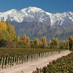 Mendoza : découvrez l'huile d'olive argentine