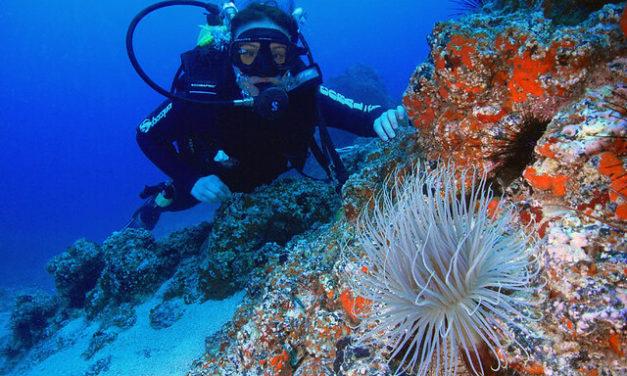 Partez à la découverte des fonds marins Argentins !