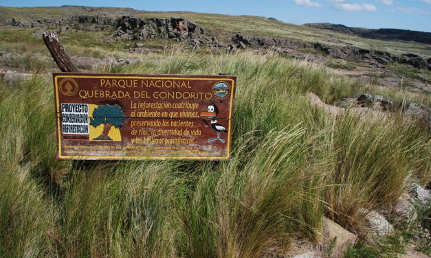 À la découverte du Parc National Quebrada del Condorito