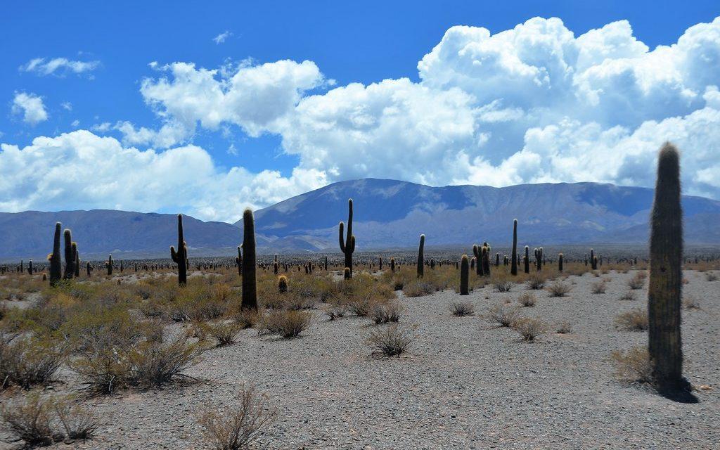 Le Parc national Los Cardones dans la province de Salta