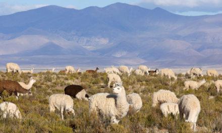 Province de La Pampa