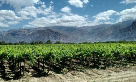 France et Argentine : mais d'où vient le vin malbec ?