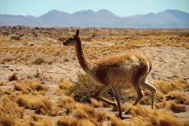 Les animaux en Argentine : une diversité impressionnante