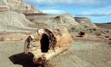Région de Santa Cruz: Le bois pétrifié de Jaramillo