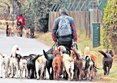 Les promeneurs de chiens à Buenos Aires